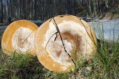 The mining beechwood Stock Image