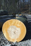 The mining beechwood Stock Photo