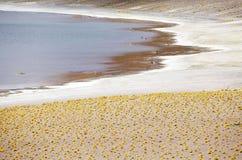 Miniques盐水湖在阿塔卡马沙漠,智利 免版税库存照片