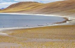 Miniques盐水湖在阿塔卡马沙漠,智利 库存照片
