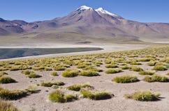 Miniques in Altiplano Chile Stock Photo