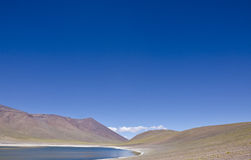 Miniques in Altiplano Chile #3 Royalty Free Stock Image