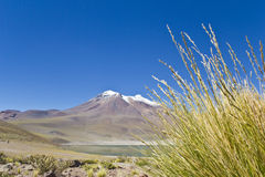 Miniques in Altiplano Chile #4 Stock Photography