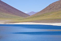 Miniques in Altiplano Chile #5 Stock Photos