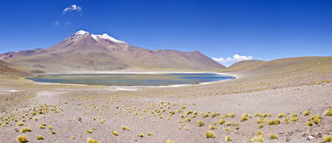 Miniques in Altiplano Chile Panorama #1 Royalty Free Stock Image
