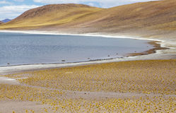 Miniques lagoon in the Atacama desert, Chile. Miniques lagoon landscape in the Atacama desert, Chile. Miniques lagoons is a brackish water lake located 4000 Stock Photo