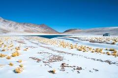 Miniques laguna w Altiplano Wysokim Andyjskim plateau Zdjęcie Royalty Free