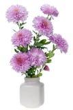 Minirosa chrysanthemumsblommor Arkivfoto