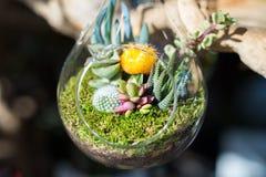 Minis-serres à l'intérieur des pots en verre clairs Image stock
