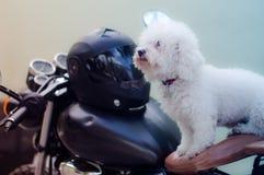 Minitoy en la bici Imagen de archivo libre de regalías