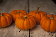 Miniture orange pumpkins. Stock Photo