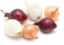 Minizwiebeln lokalisiert auf Weiß Lizenzfreie Stockfotos