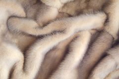 Mink coat. The texture of their hair. Close up mink fur Stock Image
