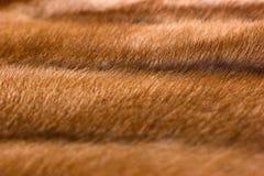 Mink fur Stock Image