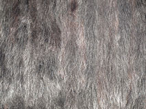 Mink fur. Stock Photography
