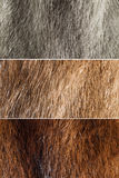 Mink Fur Stock Photos