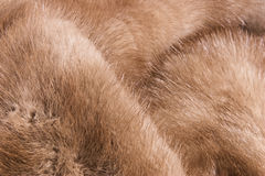 Mink Fur Royalty Free Stock Photo