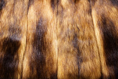 Mink fur Royalty Free Stock Images