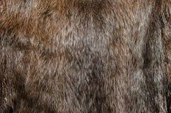 Mink fur Stock Photos