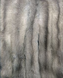 Mink Fur Gray. Mink fur for use as a background texture Stock Photos