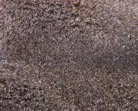 Mink fur texture background Stock Image