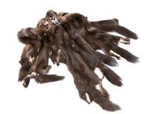 Mink skins on white background Royalty Free Stock Photo