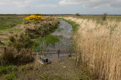 Mink trap in waterway. Stock Image