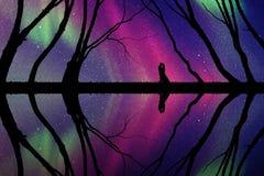 Minnaars onder bomen bij nacht Stock Foto's