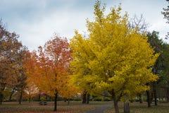 Minnehaha Park Colorful Trees. This is the Minnehaha Park in Minneapolis, Minnesota Stock Photography