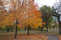 Minnehaha Park Trees. This is the Minnehaha Park in Minneapolis, Minnesota Royalty Free Stock Images