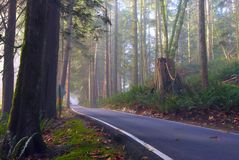 Minnekhada Park. A lonely road stretches through Minnekhada Park in morning mist Stock Image