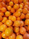 Minnelola апельсина цитрусовых фруктов Tangelo Стоковые Фотографии RF