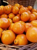 Minneola Tangelo. Side by side in a pile Royalty Free Stock Images