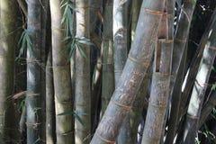 Minnes- inskriftturister på bambu Royaltyfria Bilder