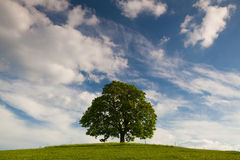 Minnes- lönnträd på mystikerstället i Votice Arkivfoto