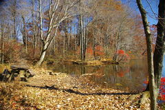 minnes- parktillstånd för lake Royaltyfria Bilder