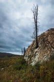 Minnes- träd Fotografering för Bildbyråer