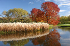 Minnesota Autumn. A picture of autumn in Minneapolis with pond and reflections Stock Image