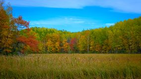 Minnesota Autumn Colorful Forest Trees met Cattails stock afbeelding