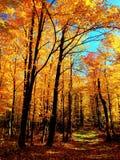 Minnesota Fall. Fall in Minnesota Forest - Golden Stock Image
