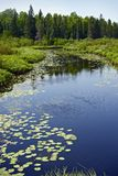 Minnesota Forest and River Stock Photo