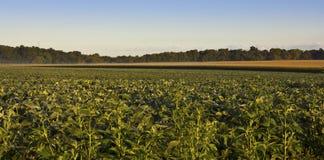 Minnesota-Getreide Stockbilder