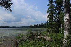 Minnesota Lake Front Landscape. With trees Royalty Free Stock Image