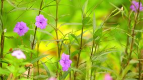 Minnie zakorzenia febra korzeniowych dzikich ogrodowych kwiaty panning kamerę zbiory wideo