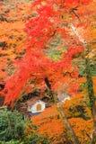 Mino waterfall. In Autumn Japan Stock Photos