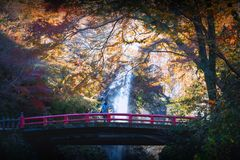 Minoh waterfall in autumn season stock images