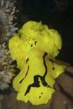 Minor neon slug Royalty Free Stock Images