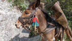 Donkey stock video  Video of mountainous, sheep, white