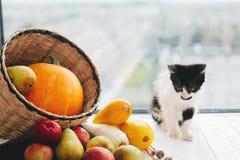 Minou adorable se reposant au potiron, à la courgette, aux pommes et aux poires dedans image stock