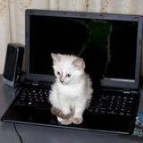 Minou aux yeux bleus se reposant sur un ordinateur portable Photo stock